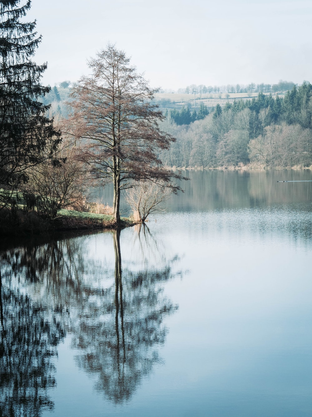 trees beside the lake view during daytime