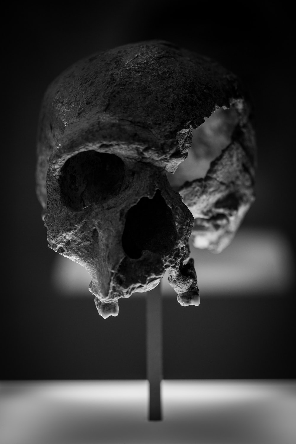 grayscale photography of a skull