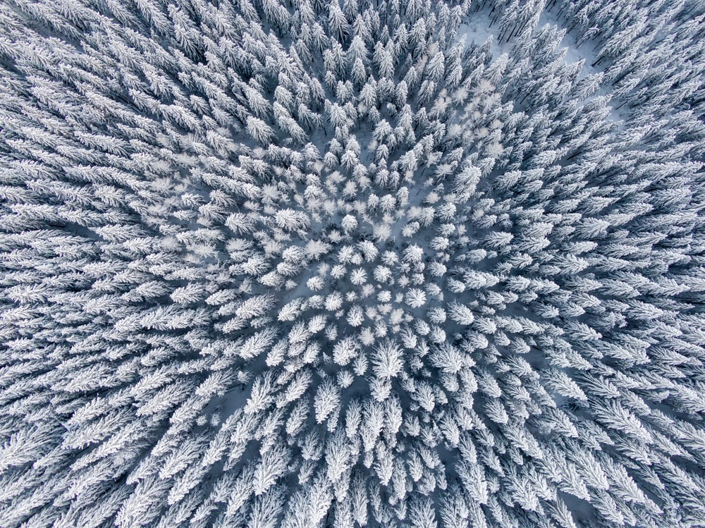 aerial photo of snow-covered trees