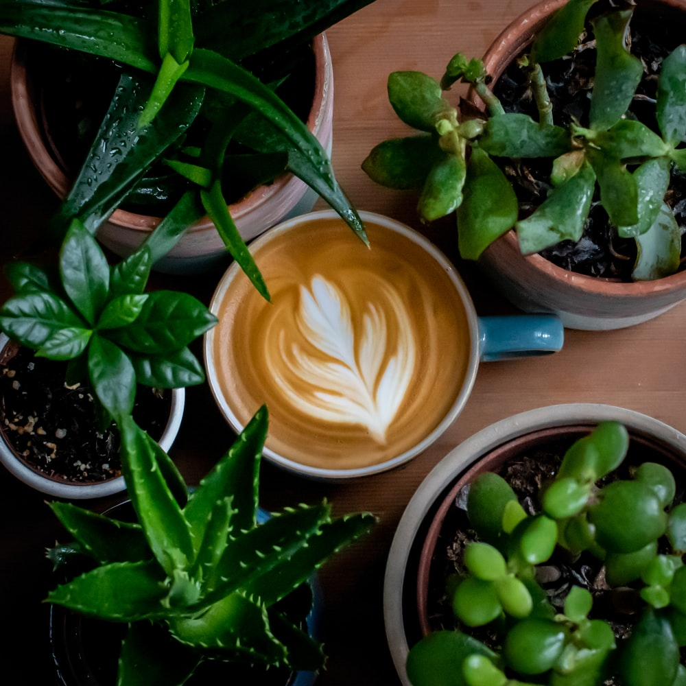 cup of brown coffee surrounded with green-leafed plants in pot