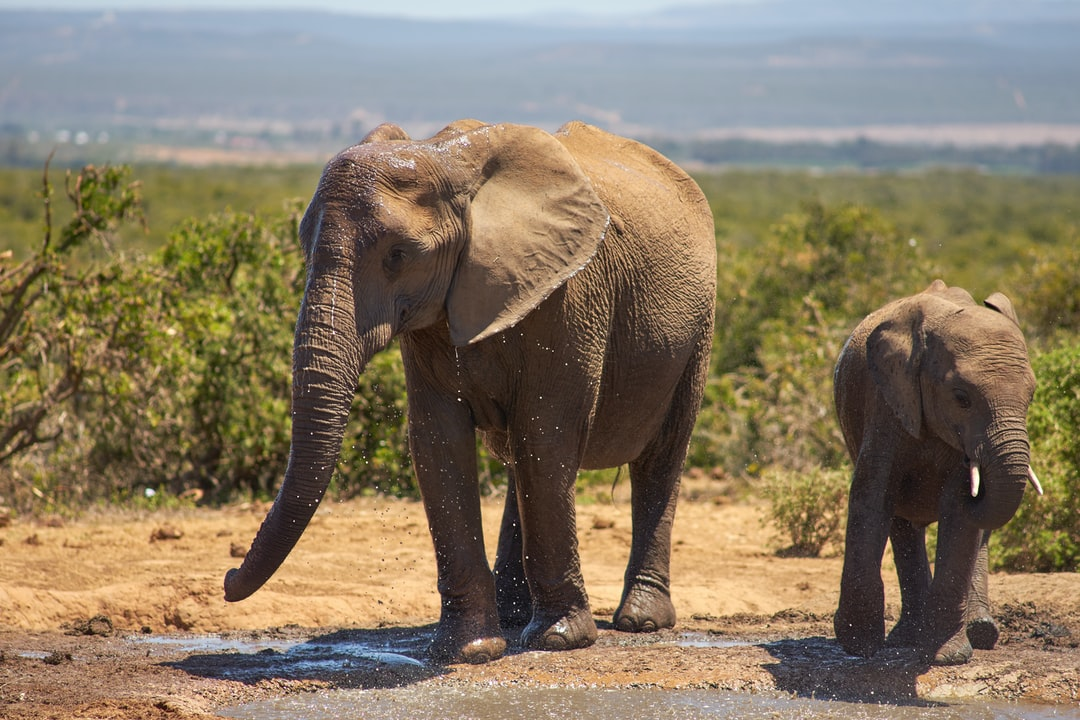 Elephant With Cub On Field - unsplash