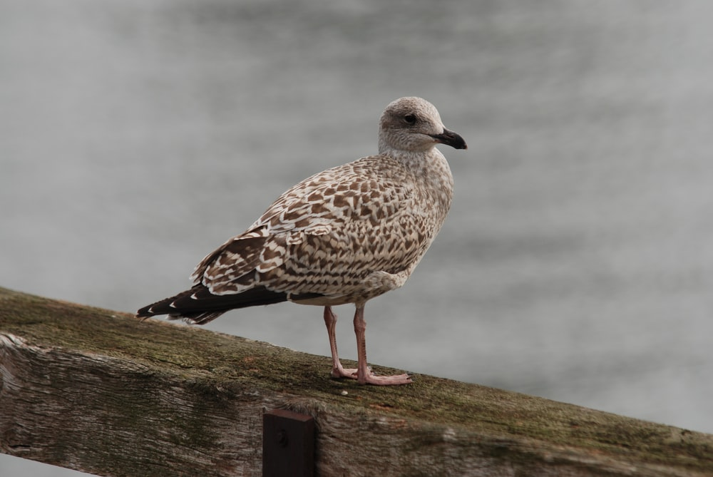 white and brown seagull on wooden surface