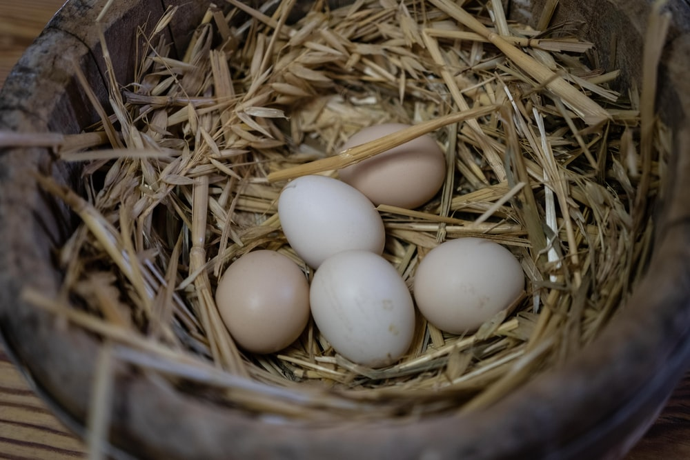 five white eggs in nest