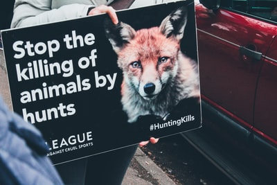 unknown person holding stop the killing of animals by hunt signage