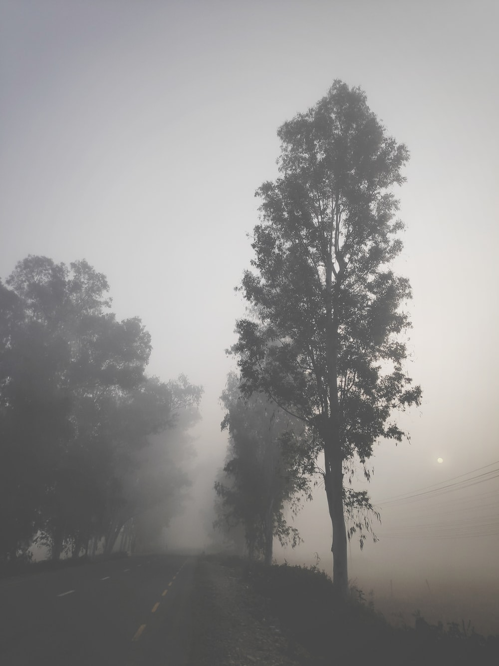 grayscale photography of trees in foggy day
