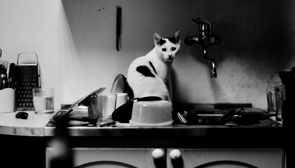 grayscale photography of cat on sink