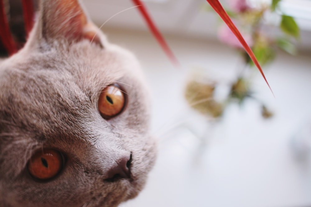 close up photography of grey cat