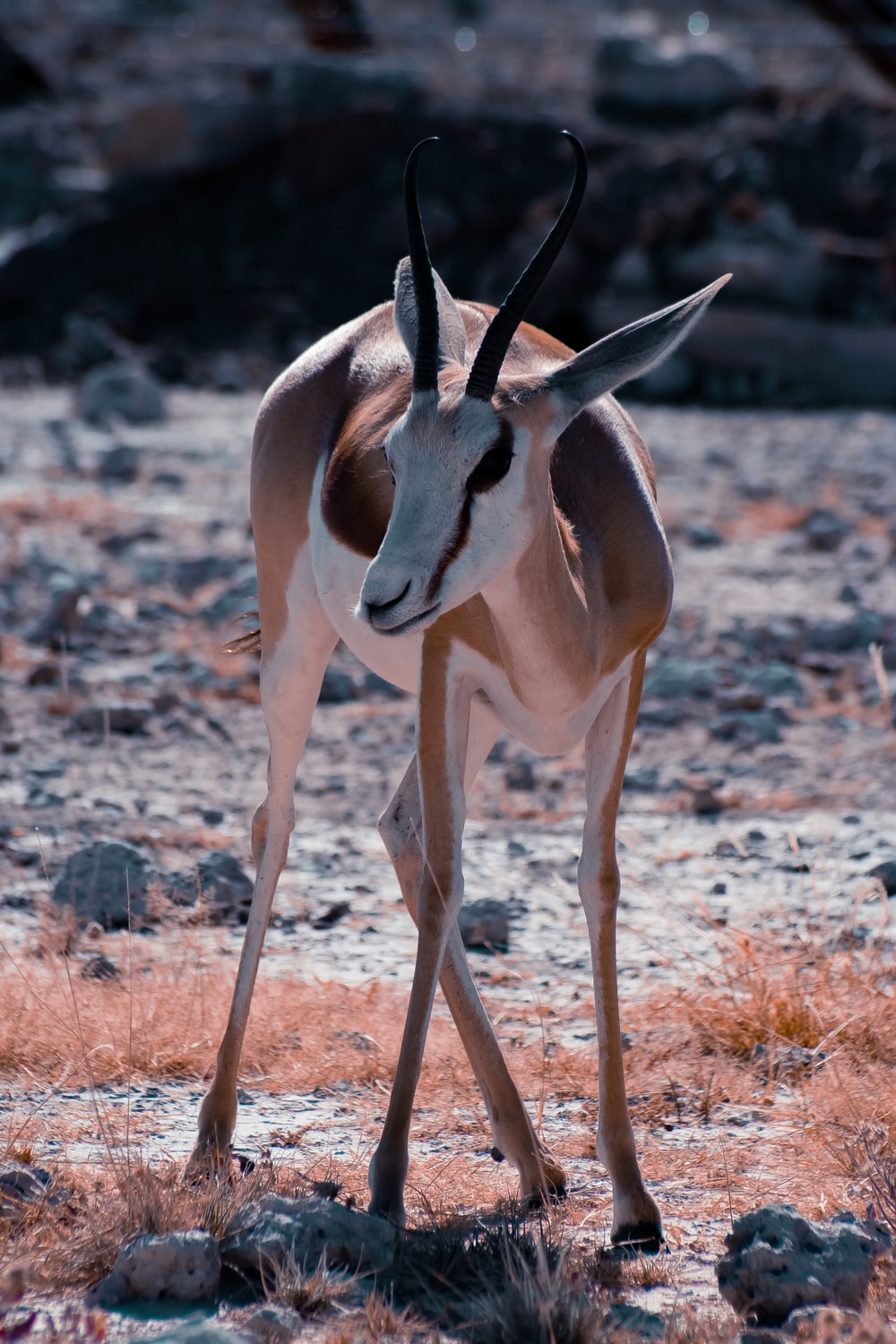 close up photography of antelope