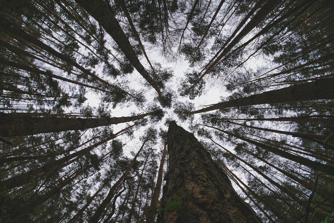 Forest In Poland - unsplash