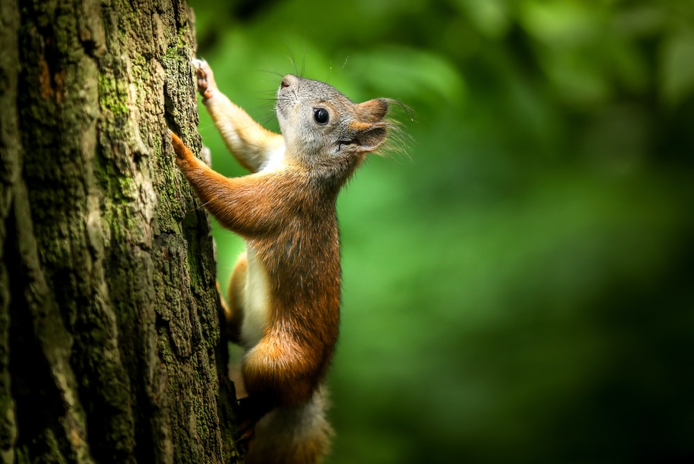 selective focus photography of brown squirrel on tree during daytime