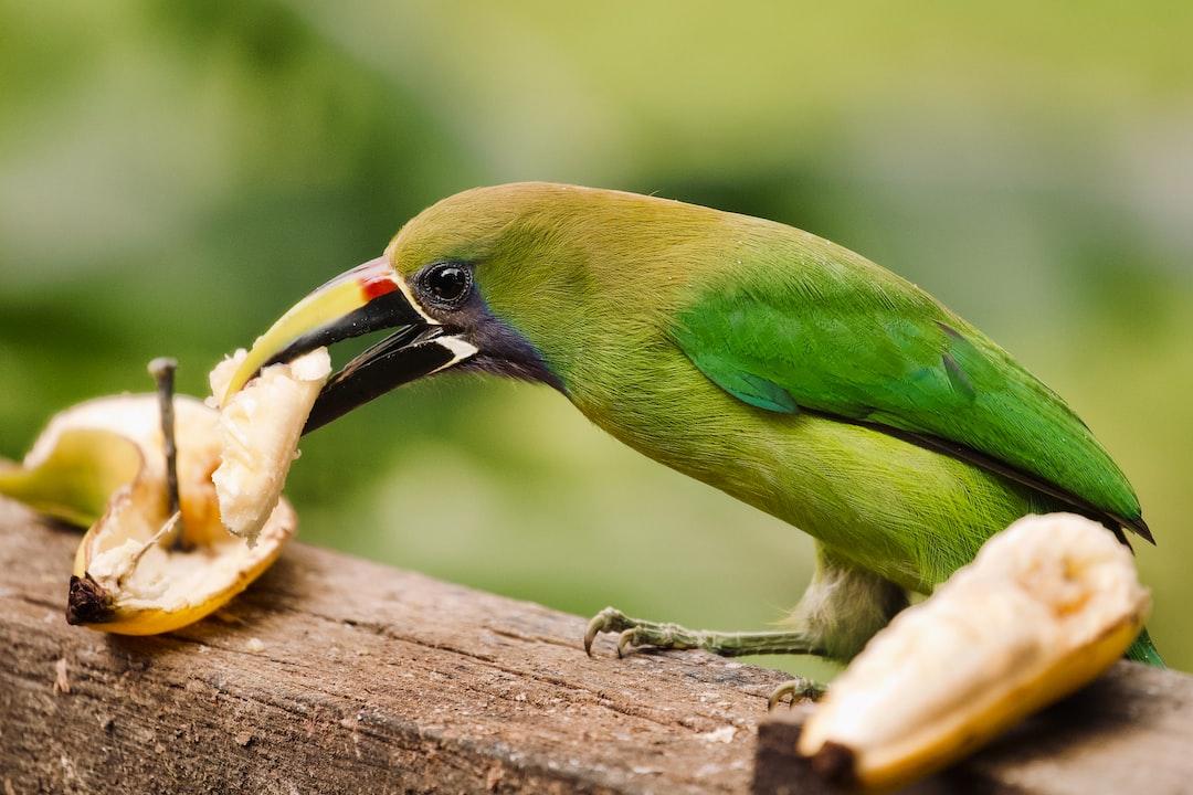 Green Bird - unsplash