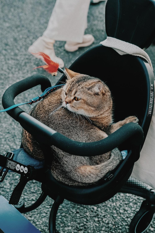 brown tabby cat sitting on stroller