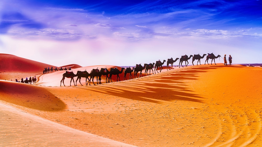 two person in front with caravan of camels in desert during daytime