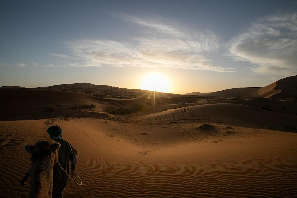 man walking on desert beside camel during daytime