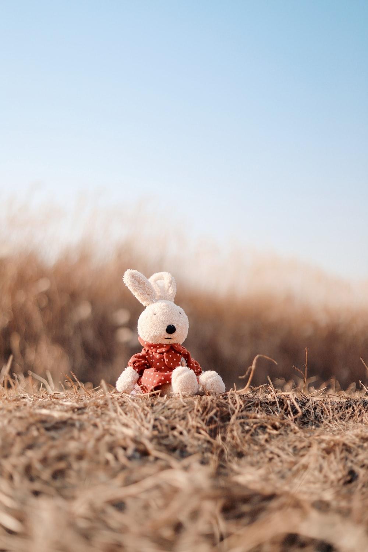 white rabbit plush toy on plant field