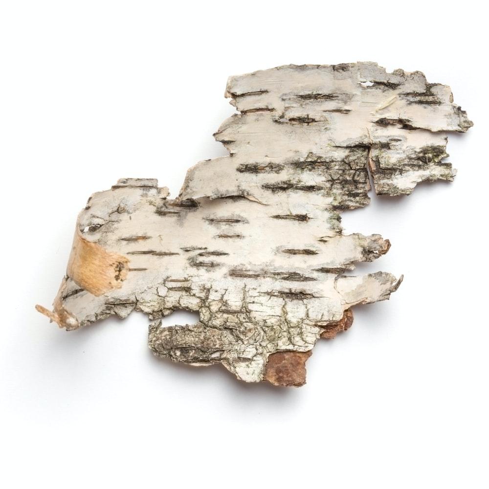 gray cutout bark