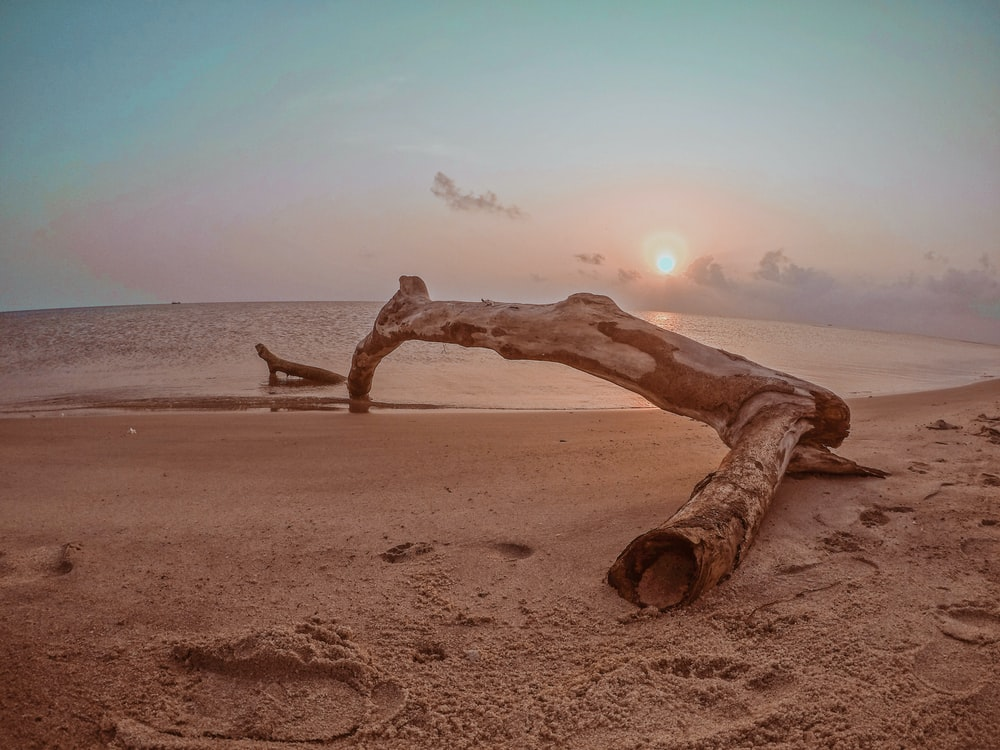 landscape photography of driftwood in seashore