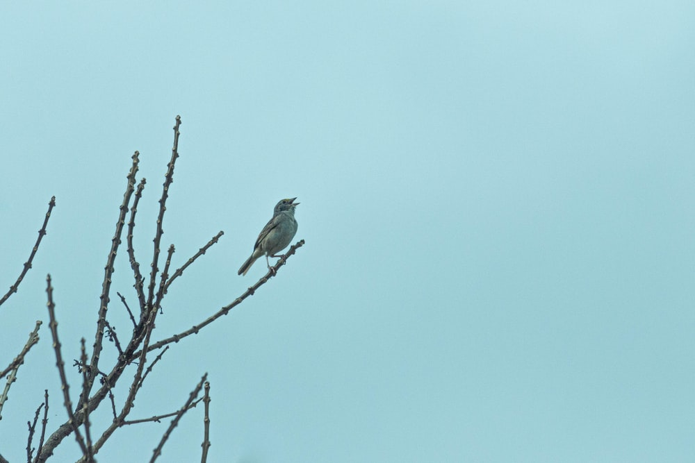bird on tree