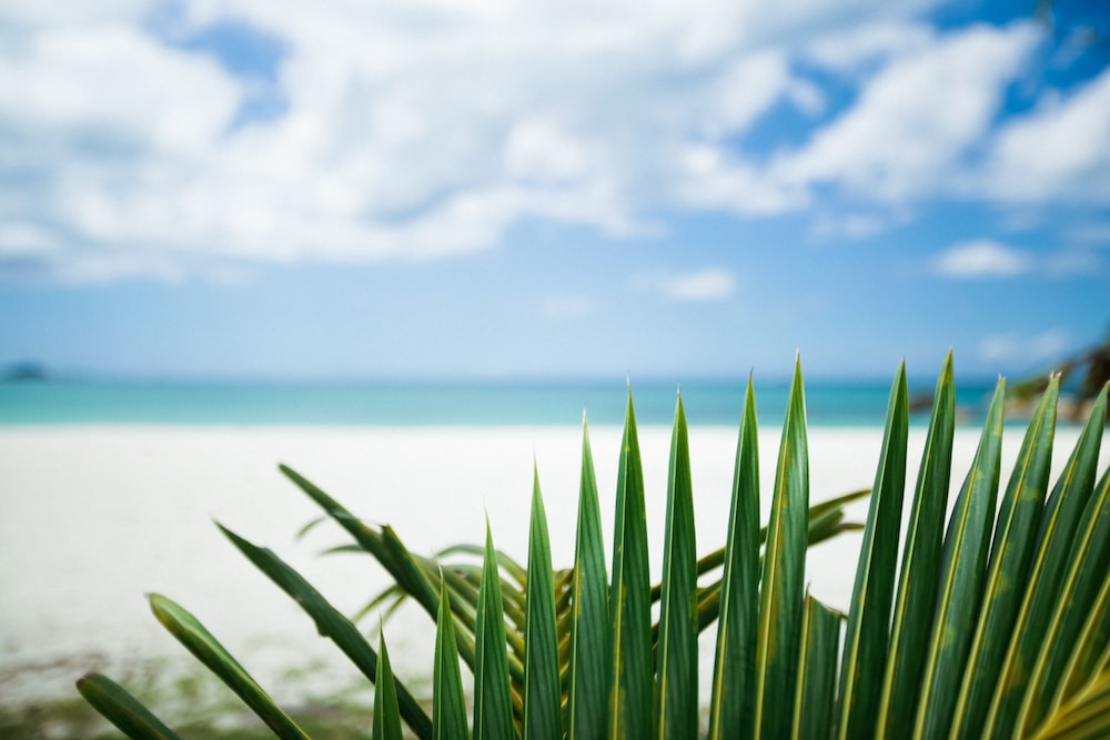 green-leafed palm tree by a white sand beach during daytime