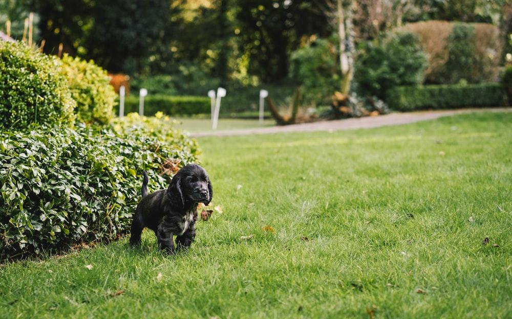 black puppy near hedge