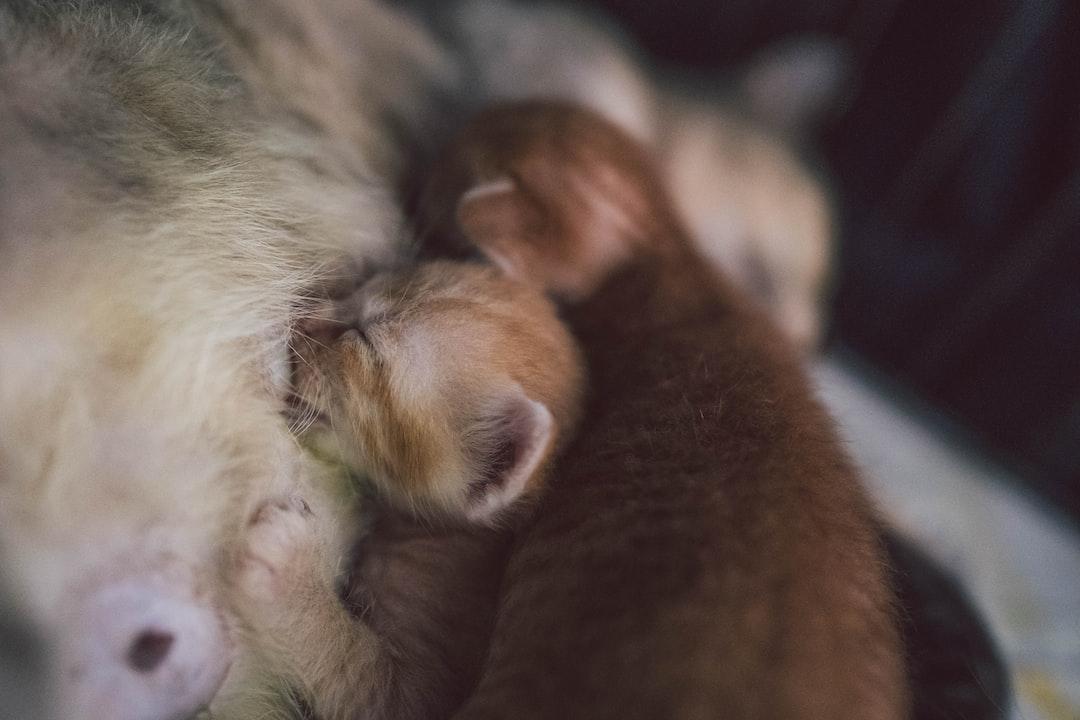 Nursing kittens