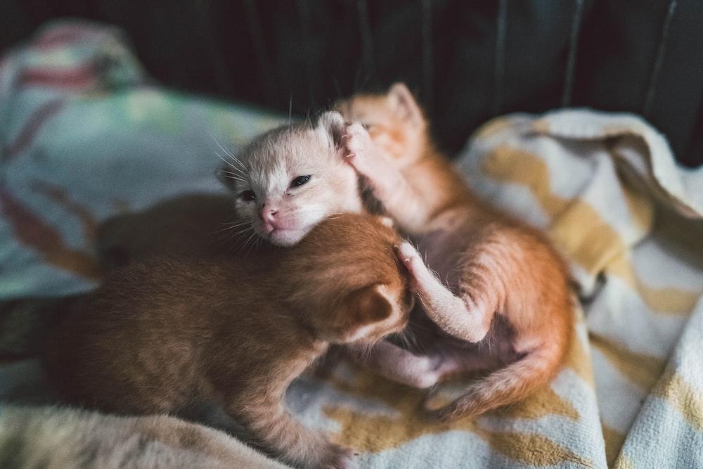 selective focus photography of orange kittens on blanket