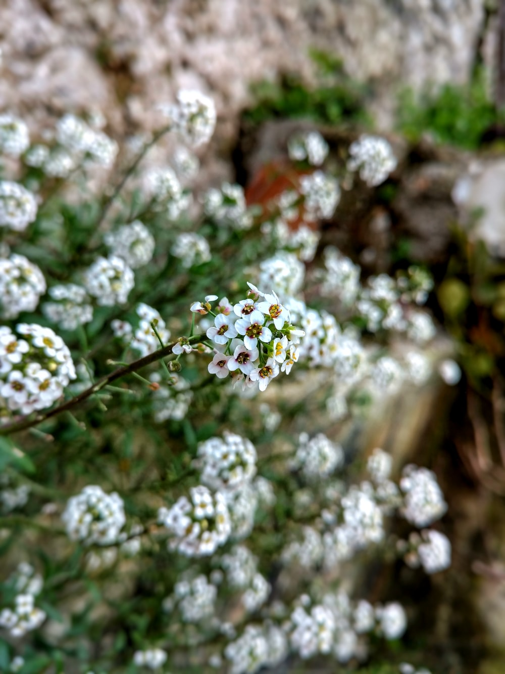 selective focus photography of white petaled flowers during daytime