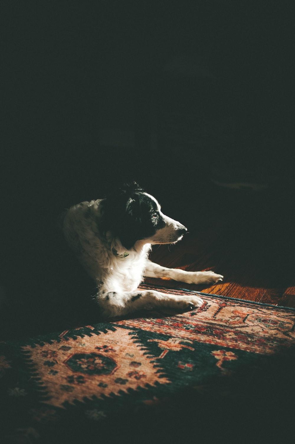 dog lying on area rug