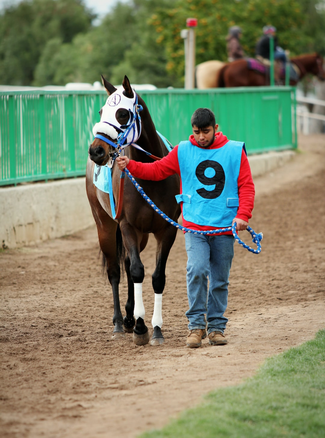 A brown race horse walks to the starting gate.