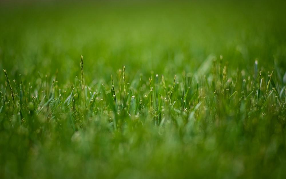 macro photography of green grasses