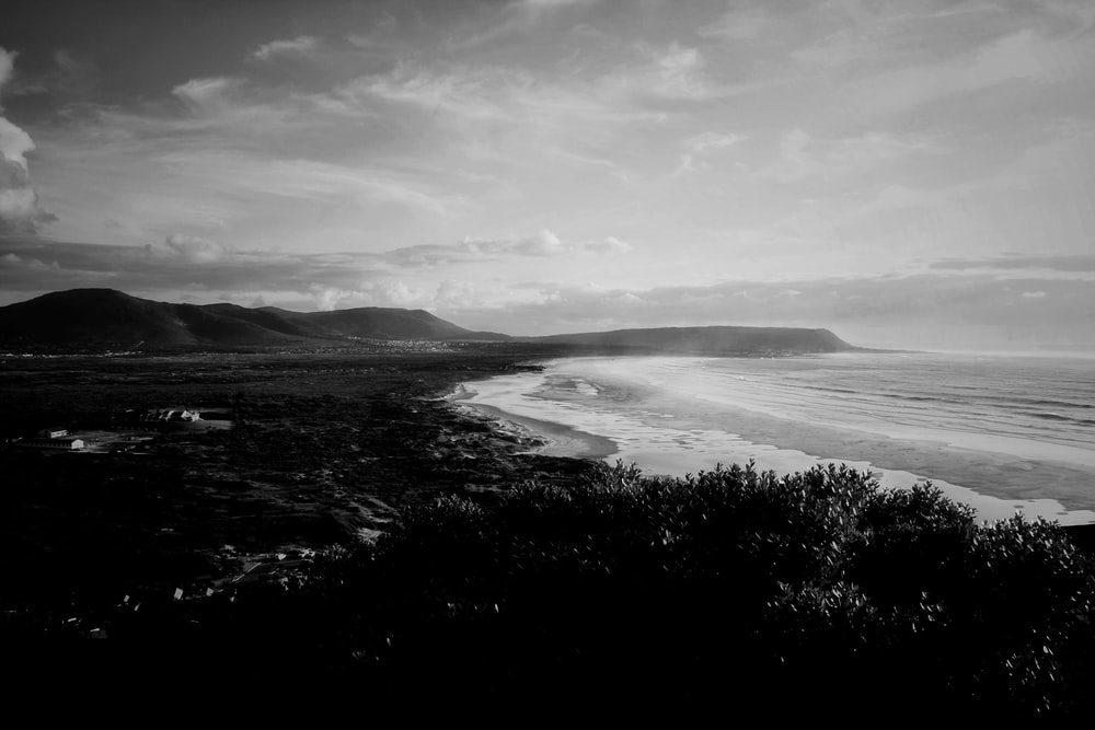 greyscale photo of seashore near trees during daytime