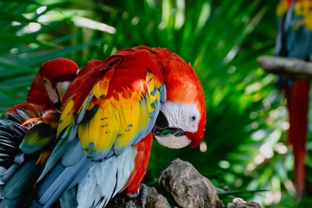 Parrot - unsplash
