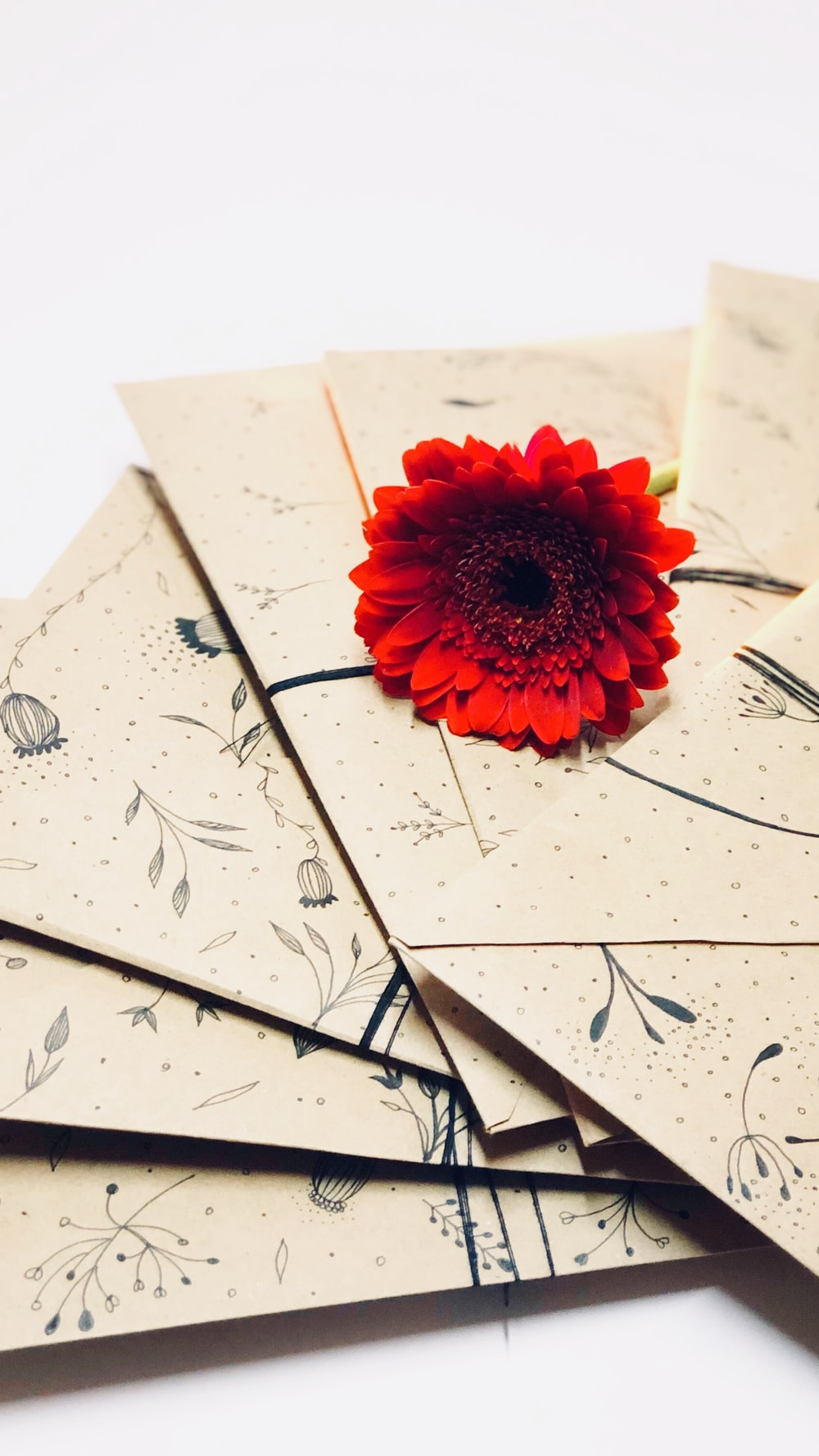 red gerbera daisy on envelope
