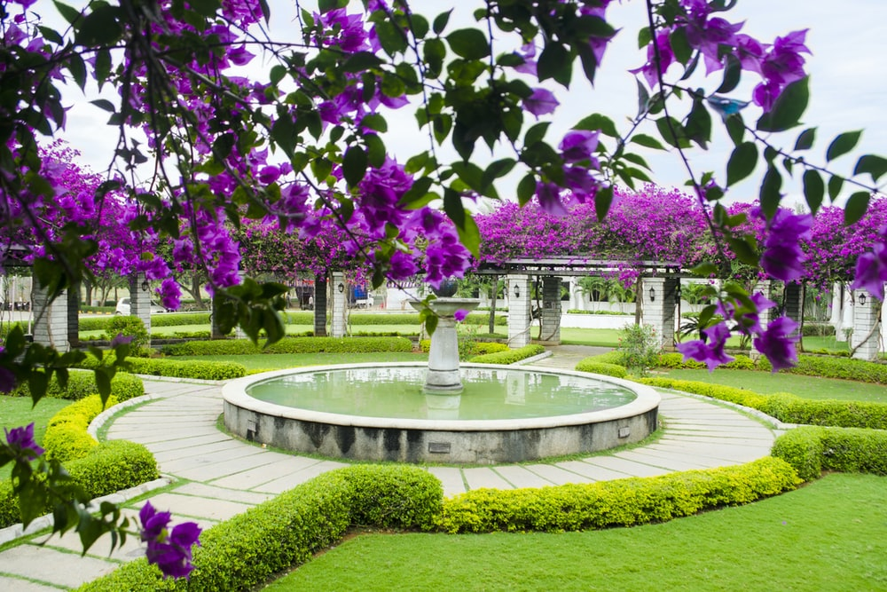 water fountain with pathways near flowers during day