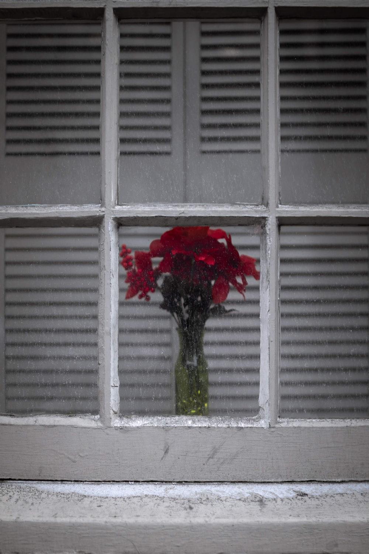 red-petaled flower in window