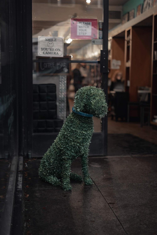 dog topiary plant near glass door