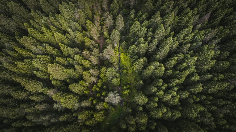aerial photography of green forest trees
