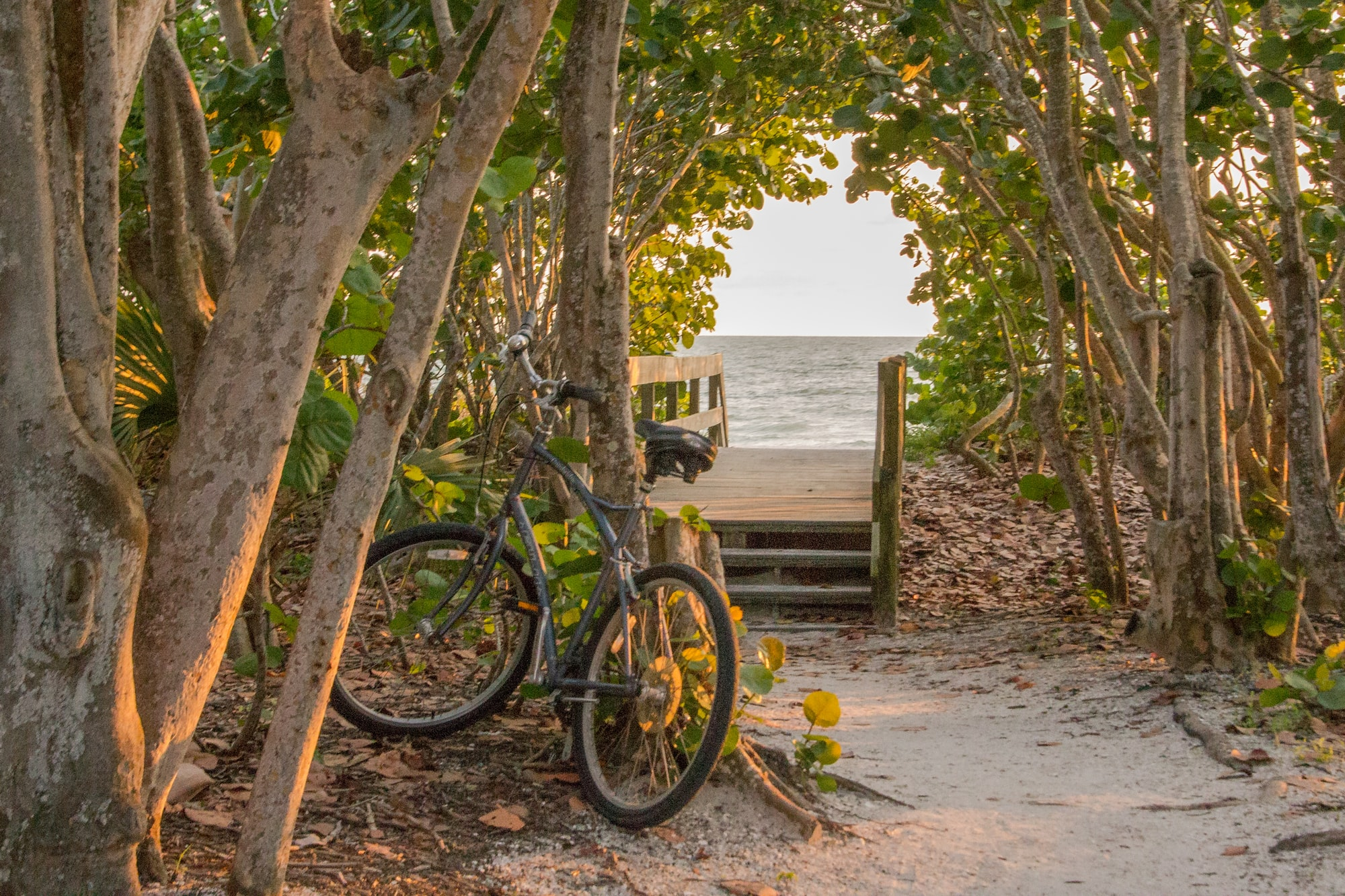 A beach bicycle rests against a tree on a beach in Sanibel Island, Florida