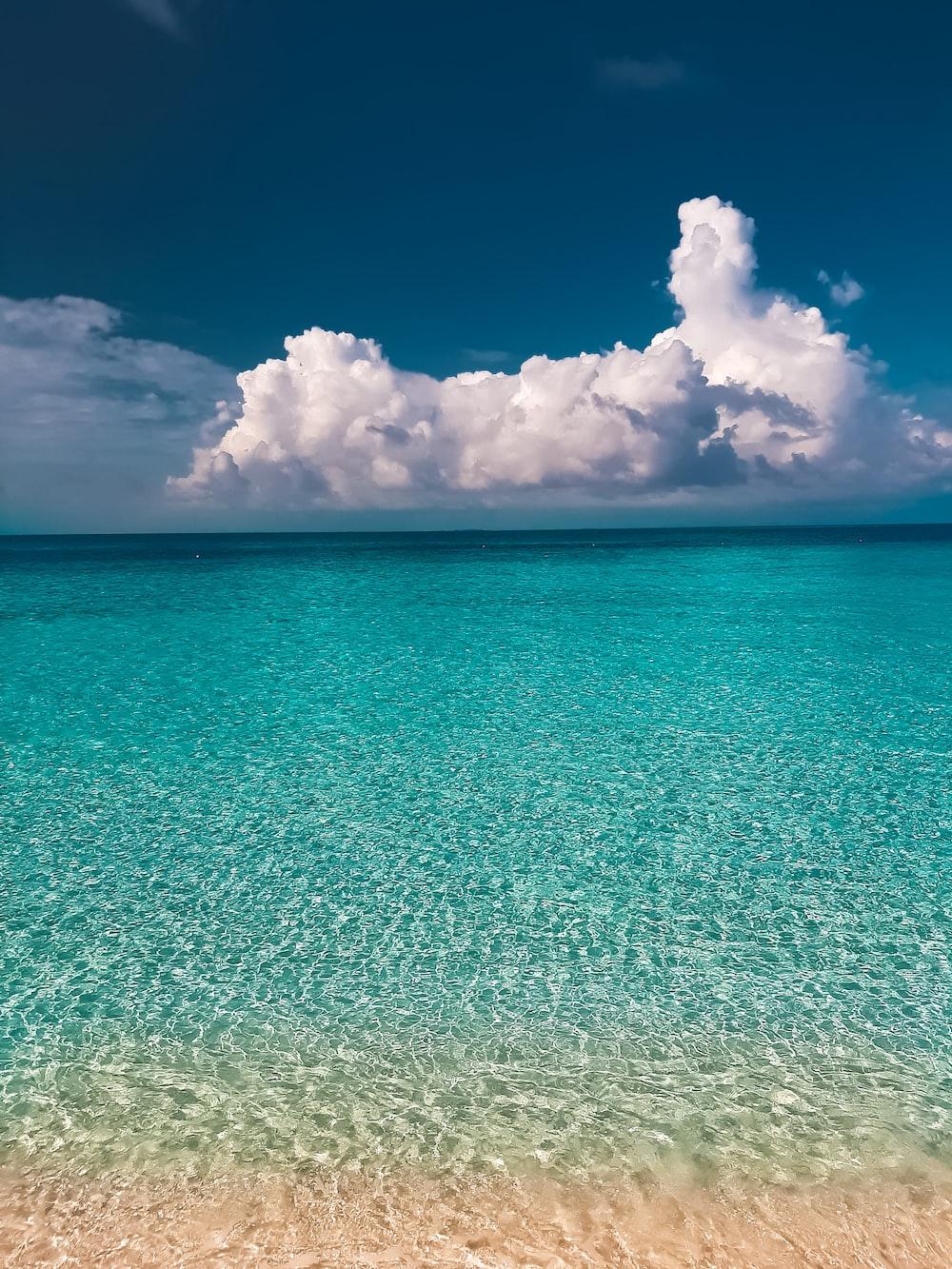 日中の海岸の写真