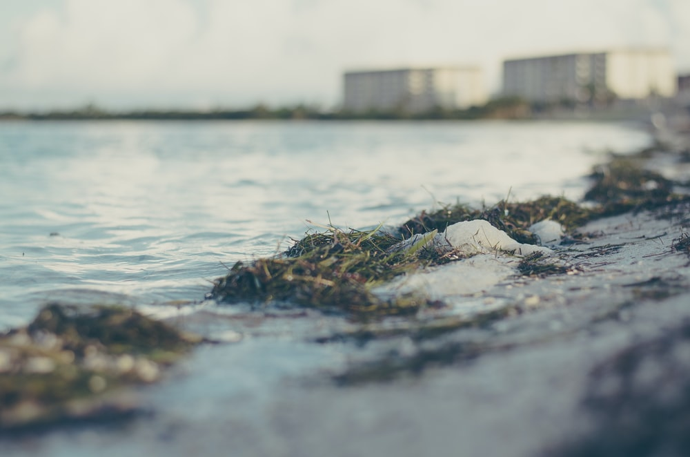 shallow focus photo of body of water
