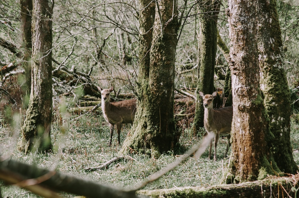 doe beside trees