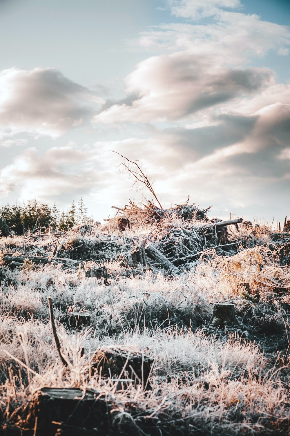grasses under white cloudy sky