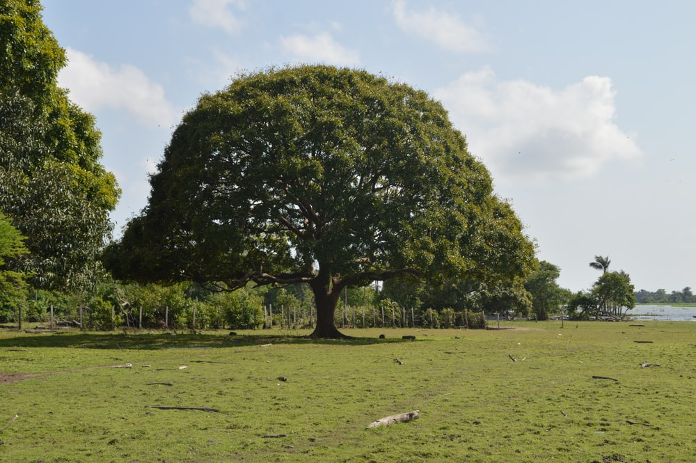 landscape photography of green-leafed tree