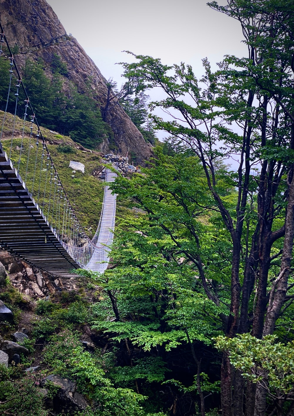 hanging bridge in forest
