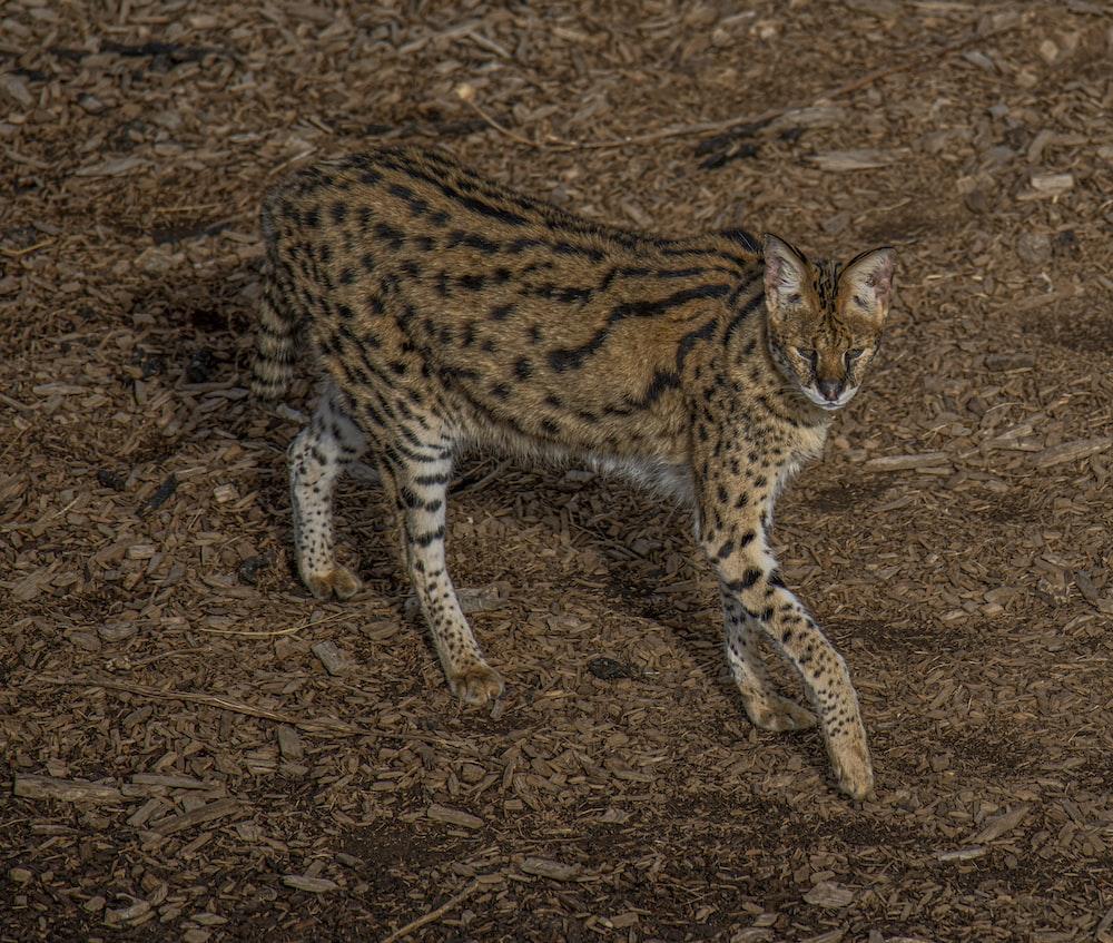 grey and brown 4-legged animal during daytime