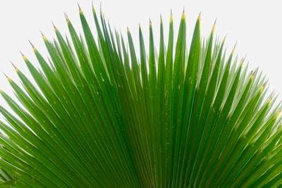 macro photography of green palm plant gambia teams background