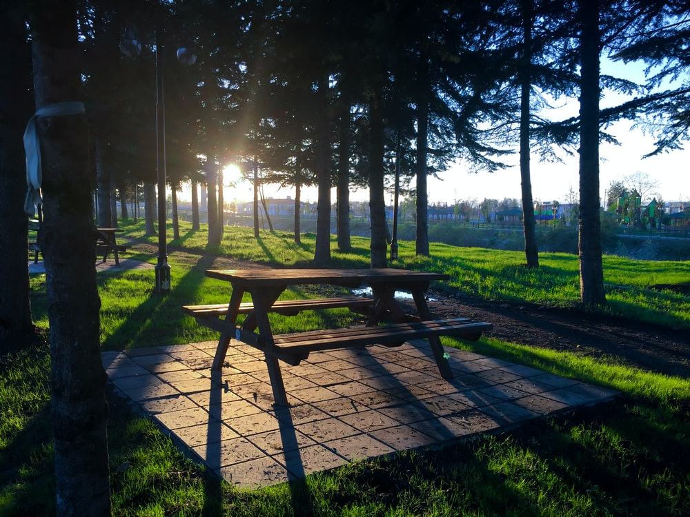 brown wooden picnic bench surrounded by green trees