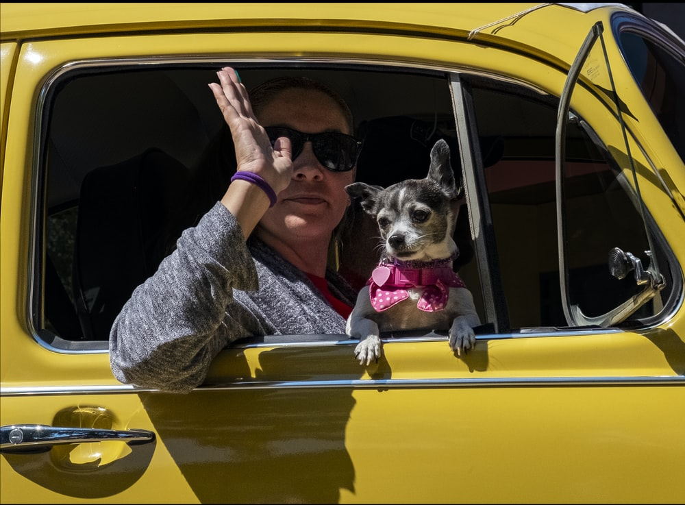 woman waving right hand while sitting inside yellow vehicle near black and white chihuahua