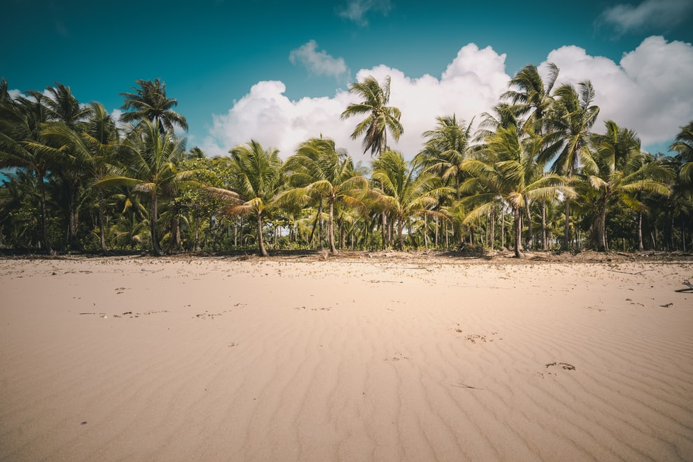 landscape photography of coconut trees under a calm blue sky