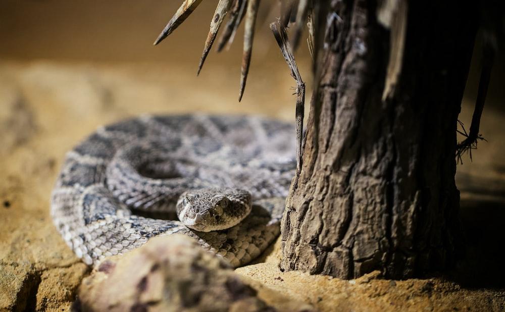 gray and black snake